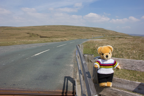 World Champion bear on Buttertubs