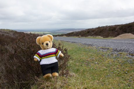 World Champion bear at the top of Lofthouse climb