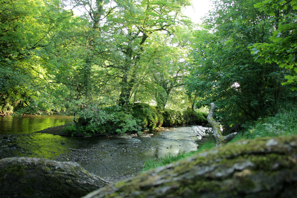 River Nidd at Limekiln Wood